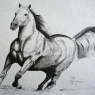 Equestrian 10