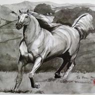 Equestrian 11